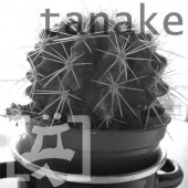 Photo of tanake